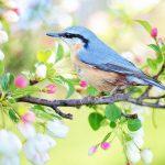 Spring Bird Blue