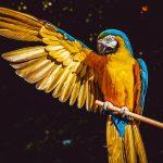 ara-parrot-yellow-macaw-bird