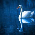 beautiful-bird-blue-calm-color